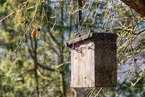 Vogelhaus im Wald by mnfotografie