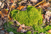 Moos im Wald by mnfotografie