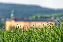 Feld mit Blick auf die Heidecksburg by mnfotografie