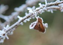 lonely leaf by Photo-Art Gabi Lahl