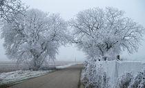 Eisiges Baum-Tor von Stephan Gehrlein