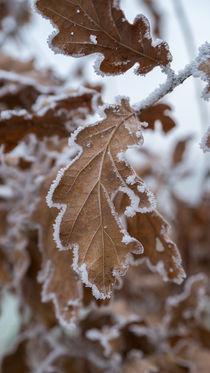 Winterkleid von Stephan Gehrlein