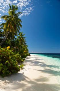 Palm-Beach 2 by Sylvia Seibl