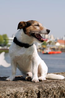 Hund5 by Edmond Marinkovic