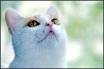 Katze2 von Edmond Marinkovic