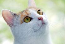 Katze von Edmond Marinkovic