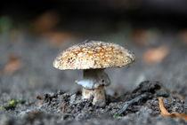 Pilze15 von Edmond Marinkovic