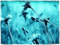 Wild Cornflowers von Sandra Vollmann