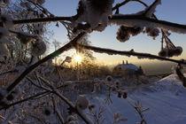 winter wonderland  by alphashooter