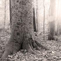 Graffiti Tree by Jon Woodhams