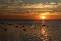 Sonnenuntergang mit Vögeln by Rene Müller