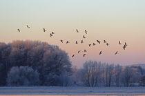 Gänseflug am Morgen by Bernhard Kaiser