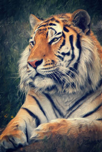 Tiger No 3 by AD DESIGN Photo + PhotoArt