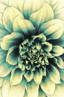 La Dahlia Blue by AD DESIGN Photo + PhotoArt