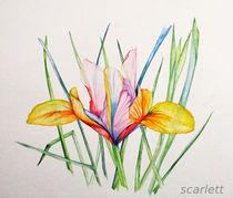 """""""Iris"""" by scarlettscharlachrot"""
