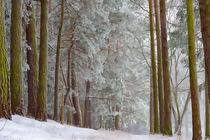 Winterlandschaft von mnfotografie