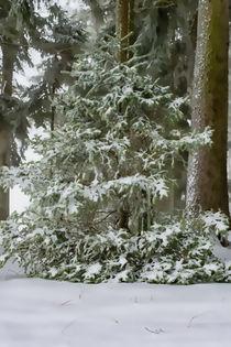 Tannenbaum im Winter by mnfotografie