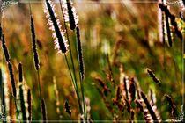 Nature Light Grasses by Sandra Vollmann