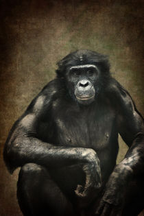 Bonobo by AD DESIGN Photo + PhotoArt