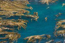 Decorative Sea by Raquel Cáceres Melo