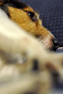 Hund13 von Edmond Marinkovic