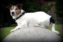 Hund16 von Edmond Marinkovic