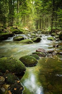 Perspektive Wald von jazzlight