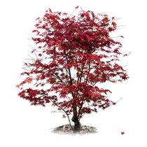 Herbstglühen von fotoabsolutart