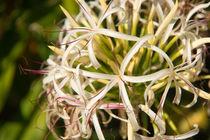 Blütenleuchten by Sylvia Seibl