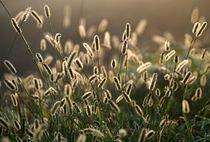 Goldene Wiese by Bruno Schmidiger