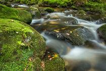 Wasser des Waldes  by jazzlight