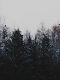 Gloomy morning von Andrei Grigorev