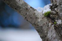 Winterzauber... 4 by loewenherz-artwork