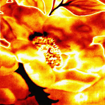 Calendula in Fire by tawin-qm