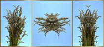 Die Verwandlung des Lavendel von Ralf Handwerk