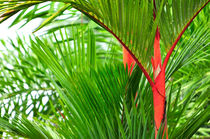Red Bamboo by Sylvia Seibl
