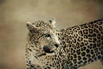 Leopard von Gisela Kretzschmar