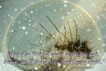 Chinesische Weisheit - Wer den Winter nicht erfahren hat... by Chris Berger