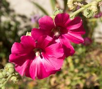 Pink Flower von Raquel Cáceres Melo