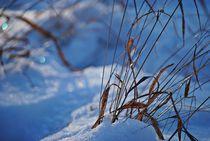 Winterzauber... 17 von loewenherz-artwork