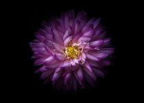 Backyard Flowers 20 Color Version von Brian Carson