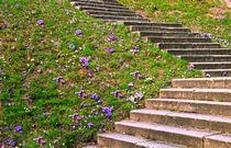 Frühjahrs-Aufstieg von Sylvia Seibl