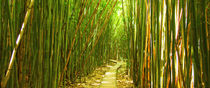 Bamboo Path by Sylvia Seibl