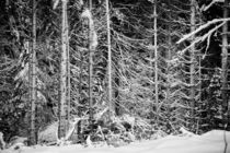 Winter Forest von dagino