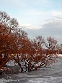 Winteridylle am alten Oderstrom by voelzis-augenblicke
