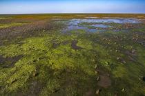 Wattenmeer in Nordfriesland by Britta Hilpert