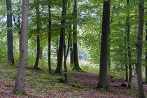 Eine lichte Stelle im Laubwald by Ronald Nickel