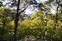 Aussicht im lichten Herbstwald by Ronald Nickel