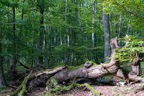 Ein toter Baum, eine Insel für neues Leben by Ronald Nickel