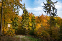 Herbstwald unter blauem Himmel von Ronald Nickel